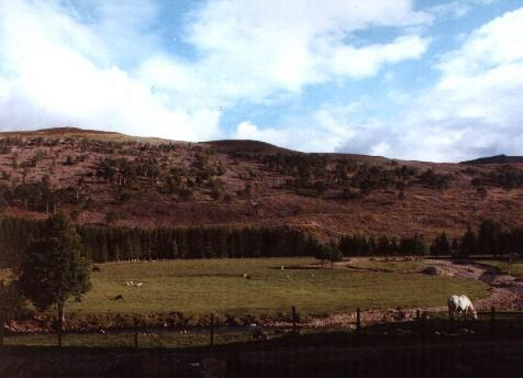 Looking across the glen from the croft